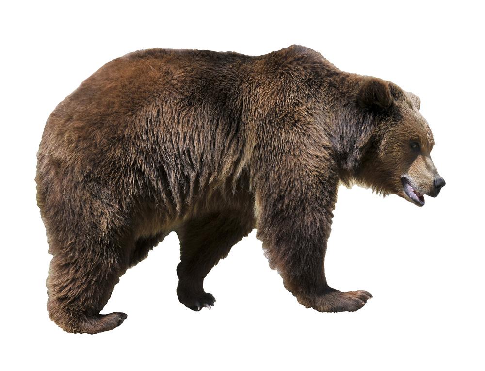 http://www.kents-cavern.co.uk/userfiles/userfiles/image/cave_bears_2.jpg